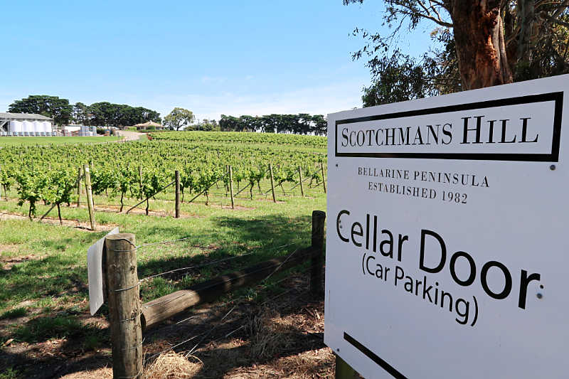 Photo of Scotchman's Hill sign and vineyard