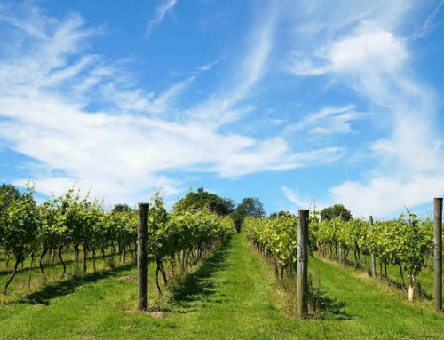 Bellarine Wineries: A Must-Have Guide To Bellarine Peninsula Wineries