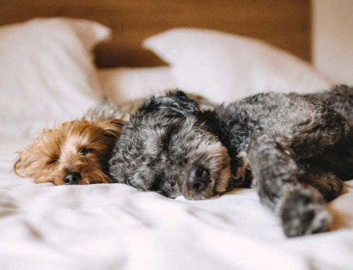 Top 9 Lorne Pet Friendly Accommodation You & Your Pooch Will Love!