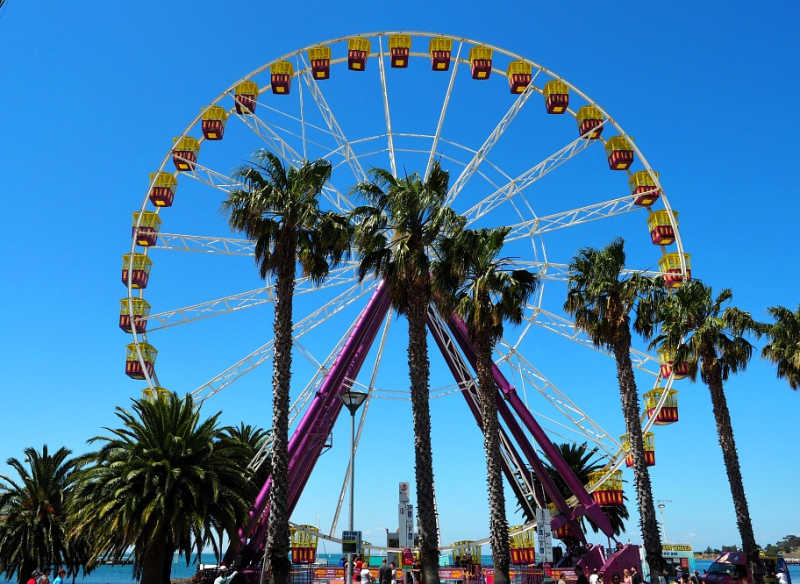 Photo of the Geelong ferris wheel with palm trees.