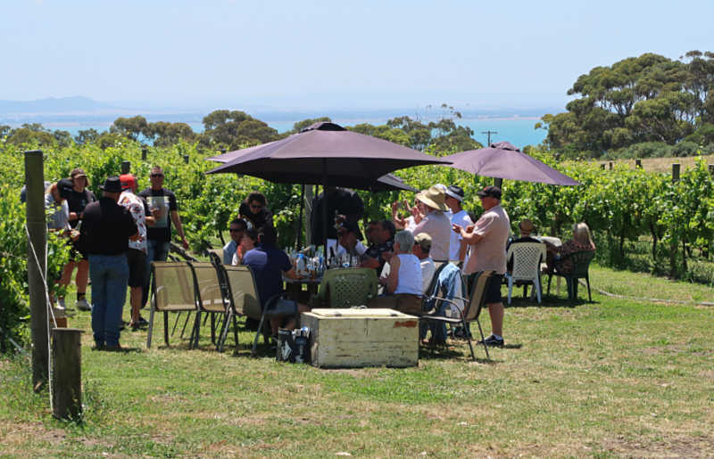 People tasting wine under umbrellas amongst the vines on a Geelong winery tour.