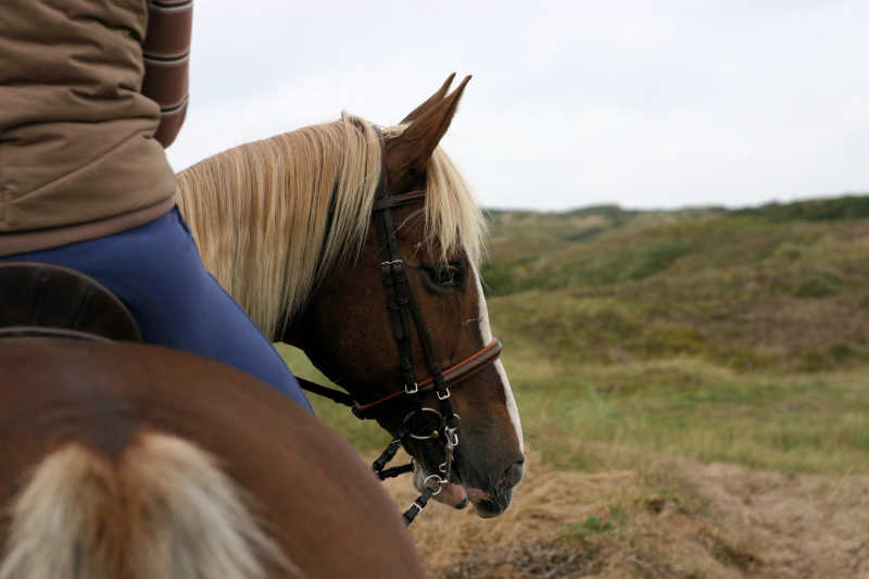 A person horse riding in Torquay.