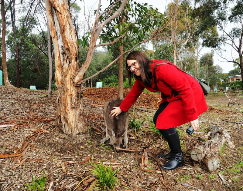 Woman in a red coat patting a Narana Aboriginal Centre kangaroo