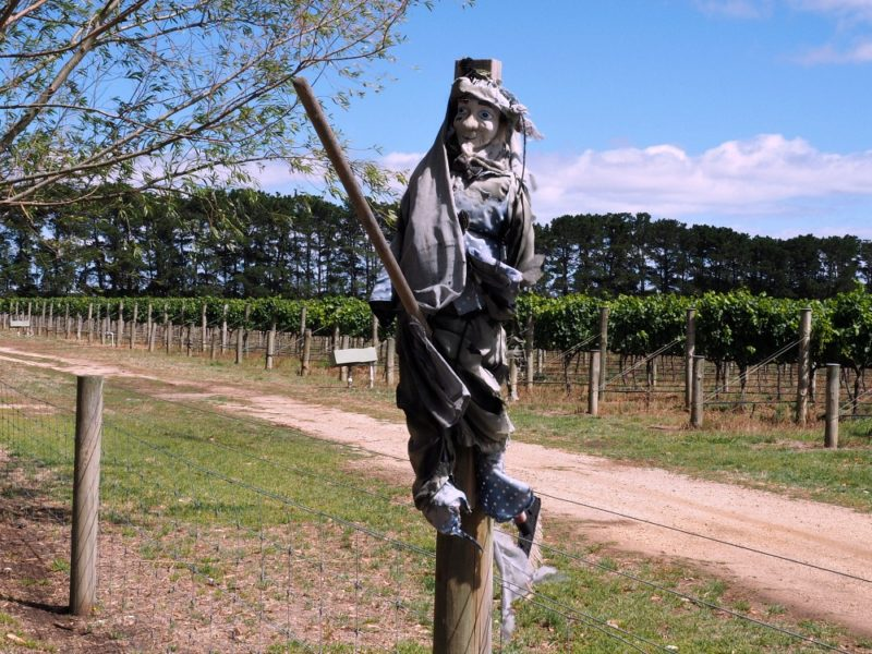 Scarecrow at Oakene Winery one of the top wineries Victoria.