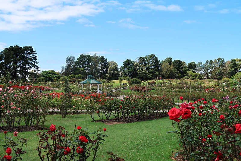 View of red roses and rotunda at the State Rose Garden.
