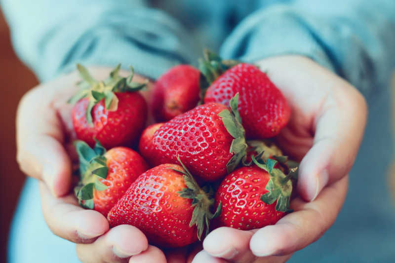 Hands holding strawberries from Surf Coast Strawberry Fields