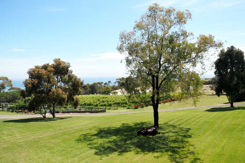 Terindah Estate Bellarine Peninsula Wineries.