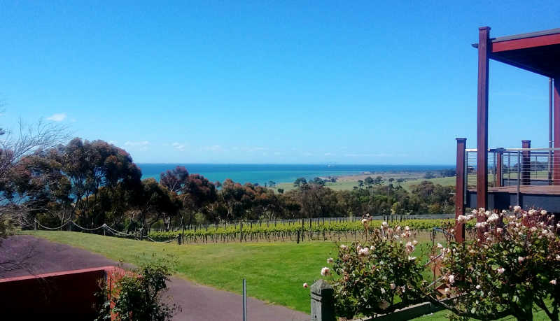 View of the Bellarine Peninsula with roses and vineyards, trees, blue sky and bay.