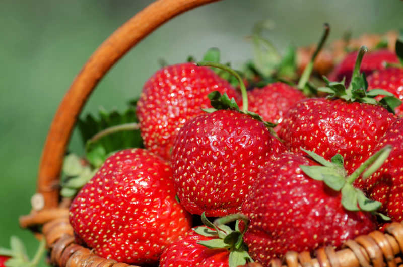 Basket of luscious red strawberries at the Wallington Strawberry Fair.