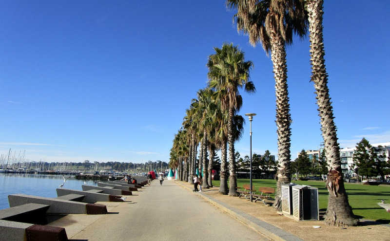 Photo of Geelong Baywalk with palm trees.