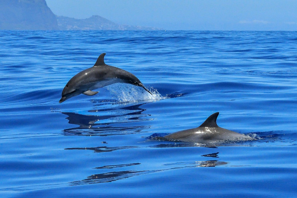 Swimming with dolphins on Geelong tours