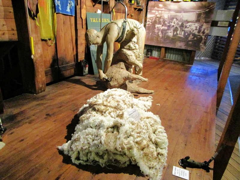 Geelong things to do - shearing display